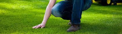 Conseils pour entretenir votre pelouse