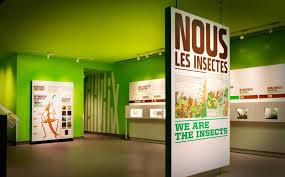 Visitez l'insectarium pour y découvrir de nombreuses espèces et même les déguster !