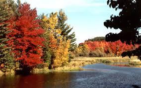 Paysage de fôret québecquoise en automne