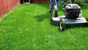 conseil pour bien tondre sa pelouse
